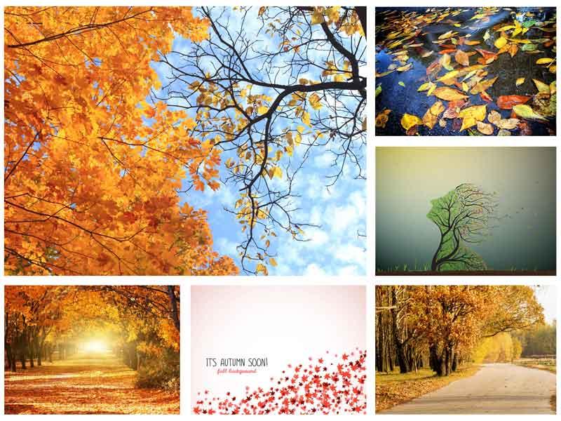 عکس استوک پاییز
